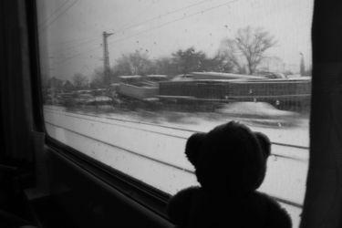 Bear_train