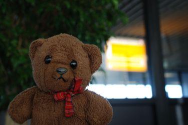 Bear_schiphol